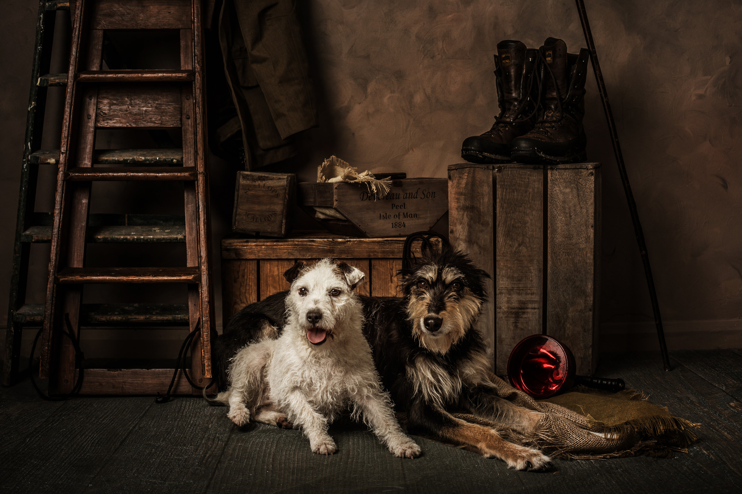 pet portrait of two dogs by Portrait photographer Preston